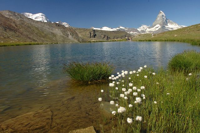 シュテリ湖。小魚が沢山いる。わたすげが湖面をにぎやかにしている。