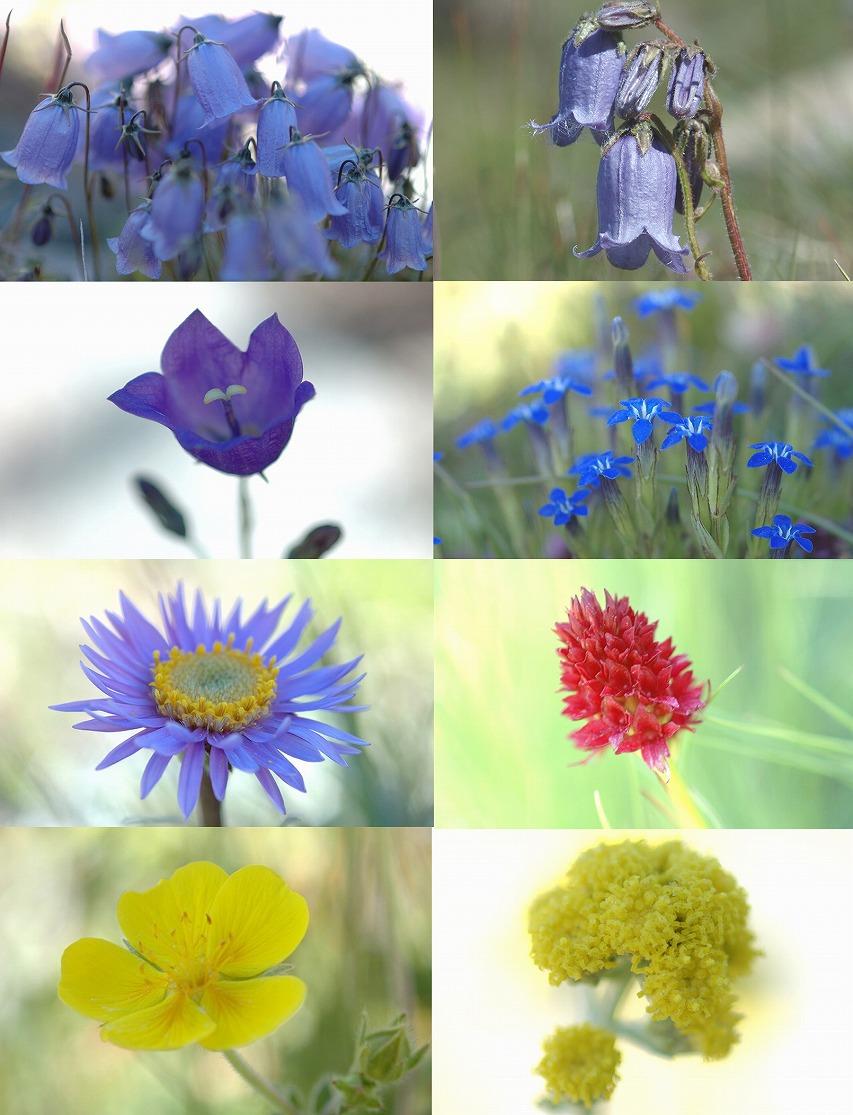 花の種類の多さは今回の旅行で1番だった